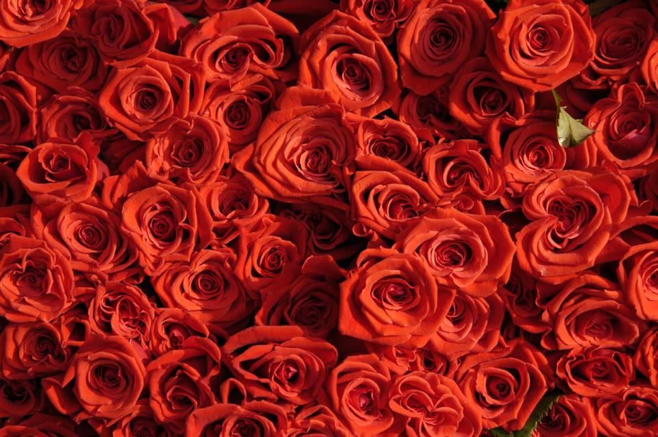 Iran: Gericht verurteilt Ehemann zum Kauf von 777 Rosen ...